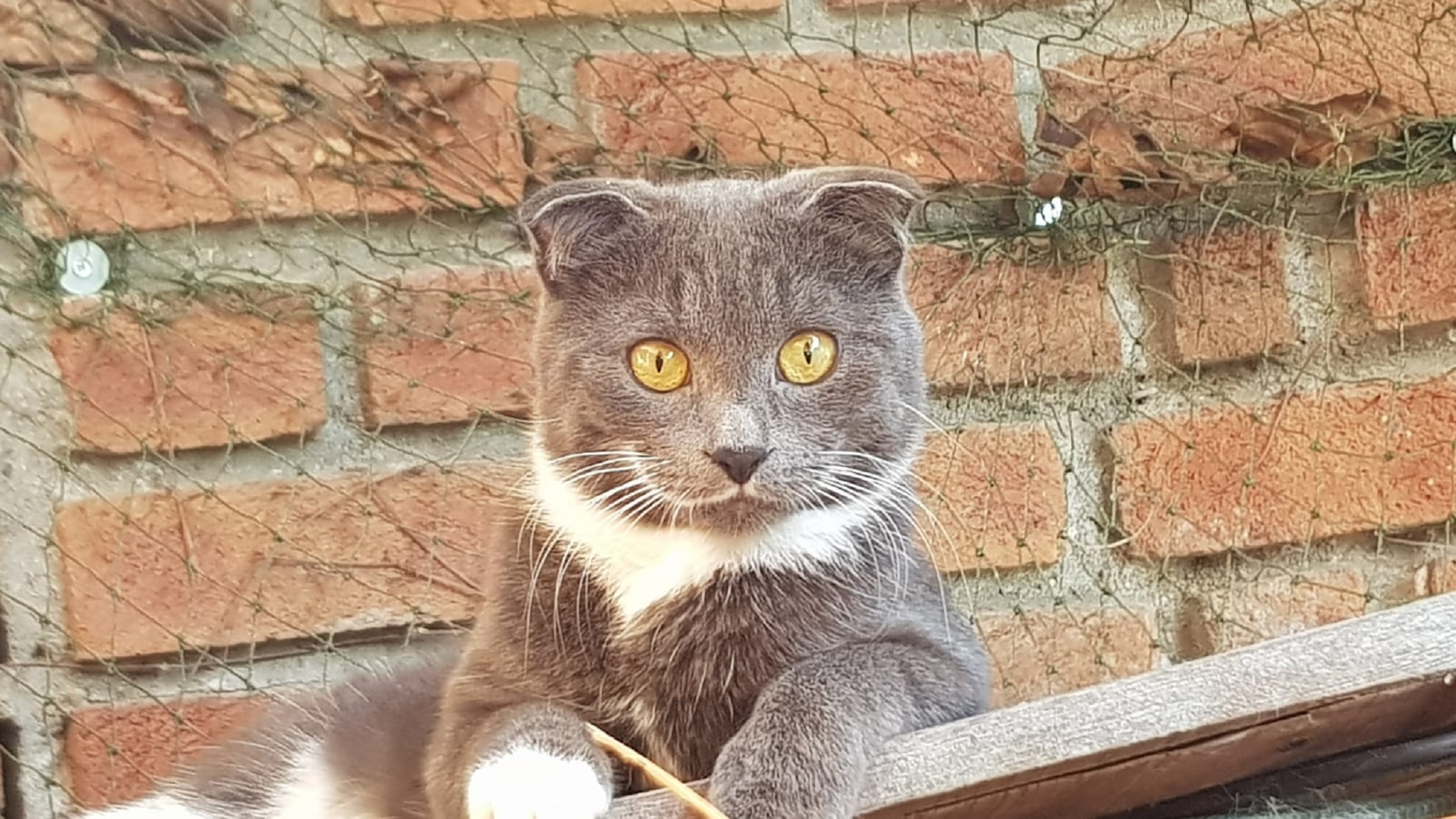 Elitekatzen
