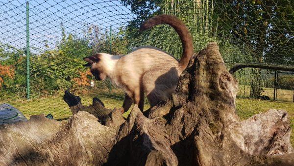 Baumwurzel Kratz und Spielplatz für Katzen Bild